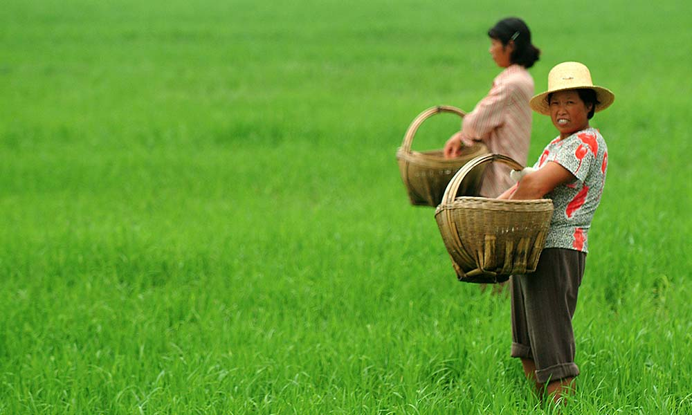 Women near Hefei, in the Chinese province of Anhui, fertilize aerobic rice, a water-saving crop undergoing on-farm trials. Photo by IRRI Photos