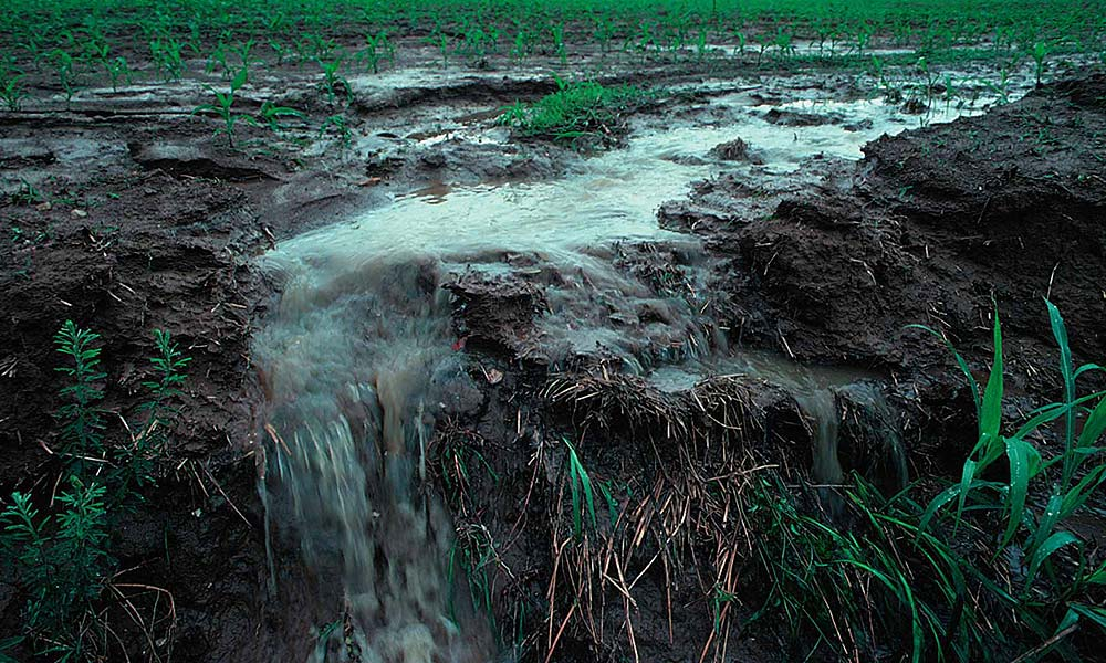 Rainfall runoff following fertilizer applications on farm fields can cause nutrient loss, potentially polluting waterways. Photo by Lynn Betts / USDA NRCS