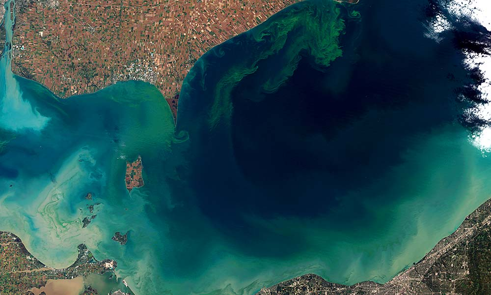This summer 2011 algal bloom in Lake Erie is visible as blue and green streaking, and was the most harmful algal bloom ever recorded. Agricultural practices enabling phosphorus losses into the western basin of the lake and meteorological conditions combined to create the bloom. Without new fertilizer management practices, this event is likely to become much more common. Photo by NASA Earth Observatory
