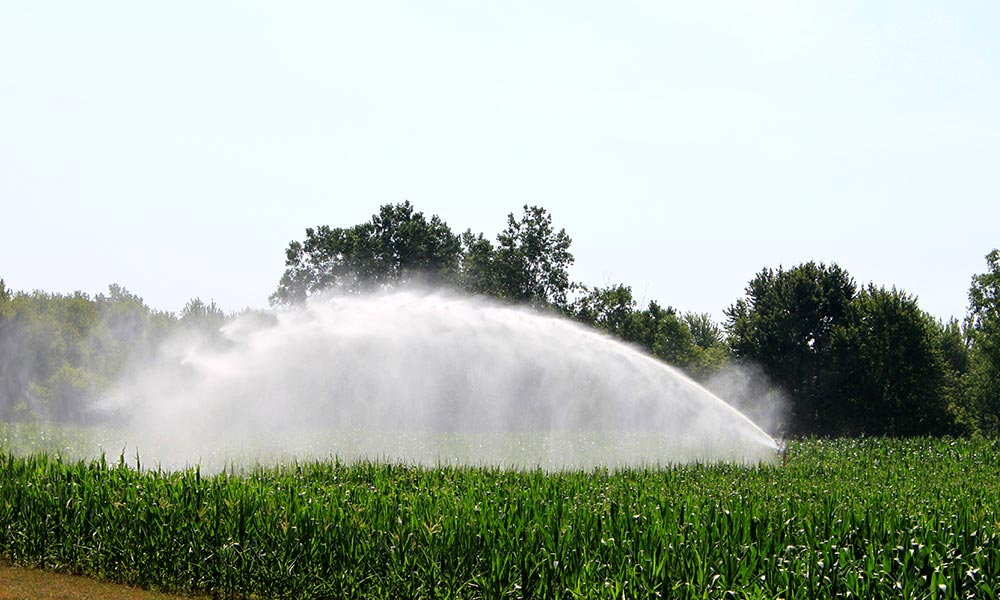 Sprinkler irrigation in Superior Township, Michigan. The sprinkler waters this corn field in a way that mimics natural rainfall. Photo by Dwight Burdette.