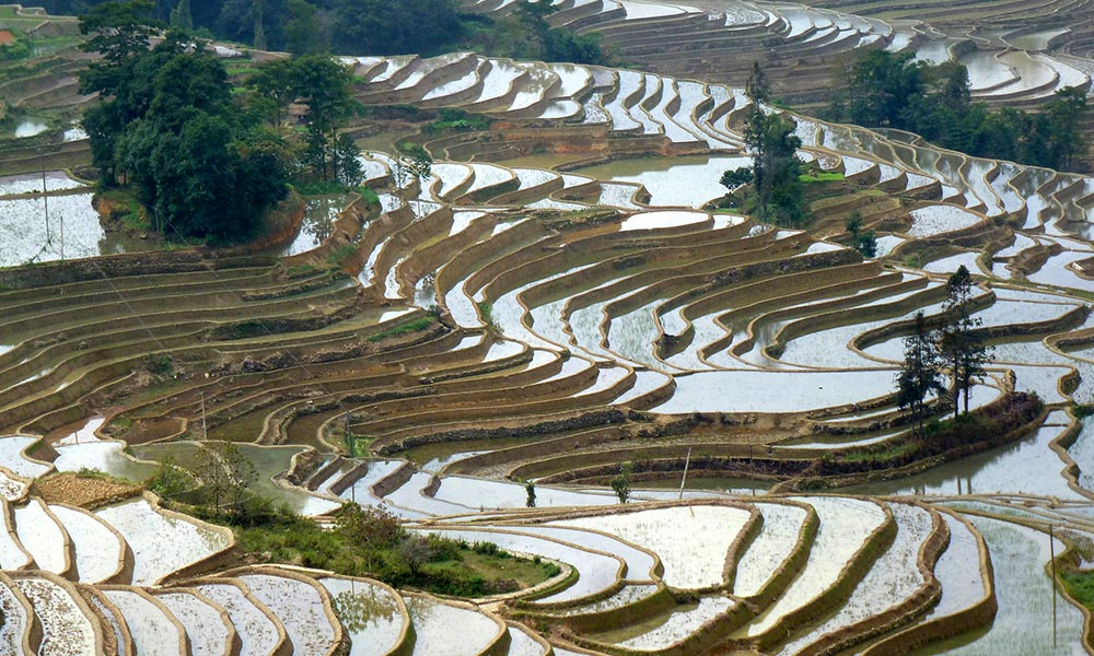 Rice paddy in Yuanyang, China. To irrigate their crop, farmers channel water down step-like terraces. Photo by Yulin Jia / BMC Ecology.